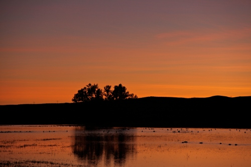 A view of sunset over the crane pools at Bosque del Apache.