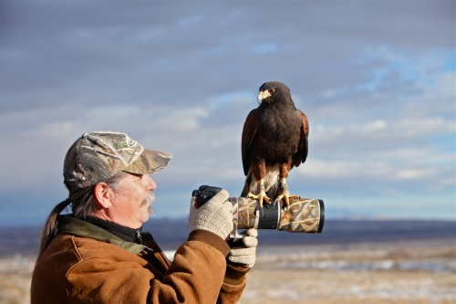 Harris Hawk and Bosque Bill.