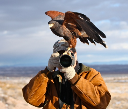 Harris Hawk and Bosque Bill
