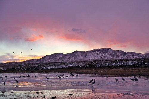 Sunset at Bosque del Apache National Wildlife Refuge.