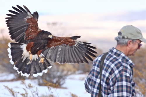 Harris Hawk and Matt Mitchell.