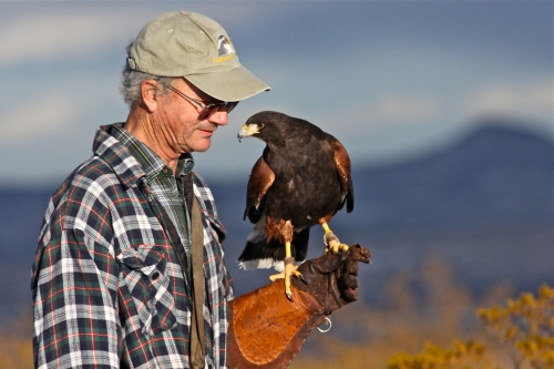Matt Mitchell and one of his Harris Hawks.