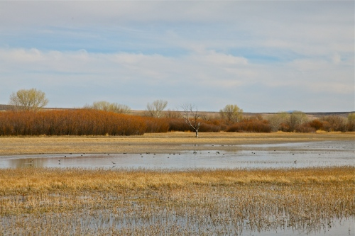 A beautiful day at Bosque del Apache National Wildlife Refuge.