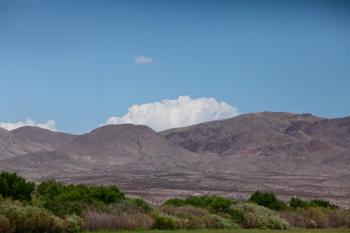 Looking across the refuge toward the hills, Bosque del Apache NWR.