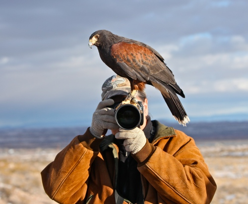 Bosque Bill and the Harris Hawk.