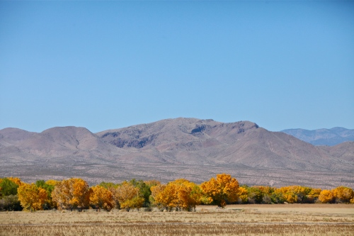 Beautiful scenery at Bosque del Apache National Wildlife Refuge.