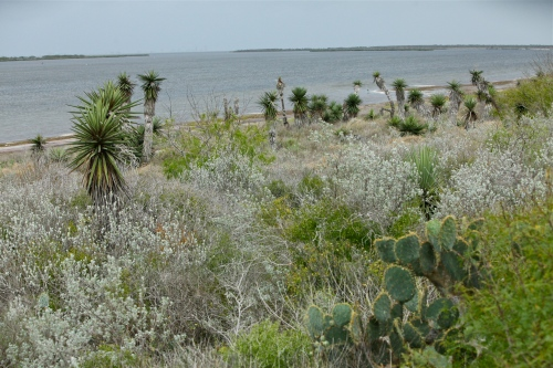 Laguna Madre Bay and desert scrub vegetation.