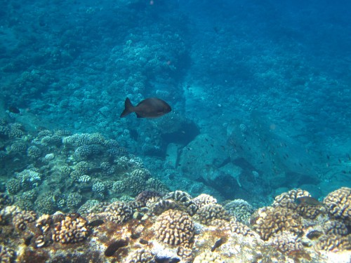 Coral and fish, Lehua, Hawaii