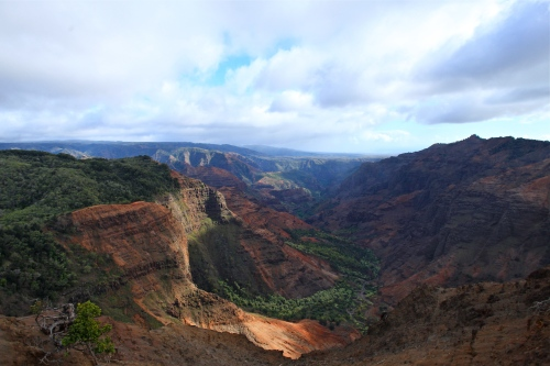View of Waimea Canyon, Puu Hinahina Viewpoint, Kokee State Park