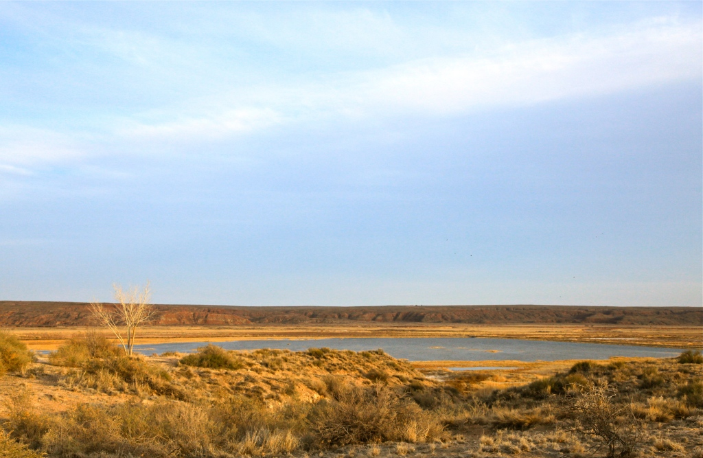 View from the Visitor's Center deck, Bitter Lake National Wildlife Refuge